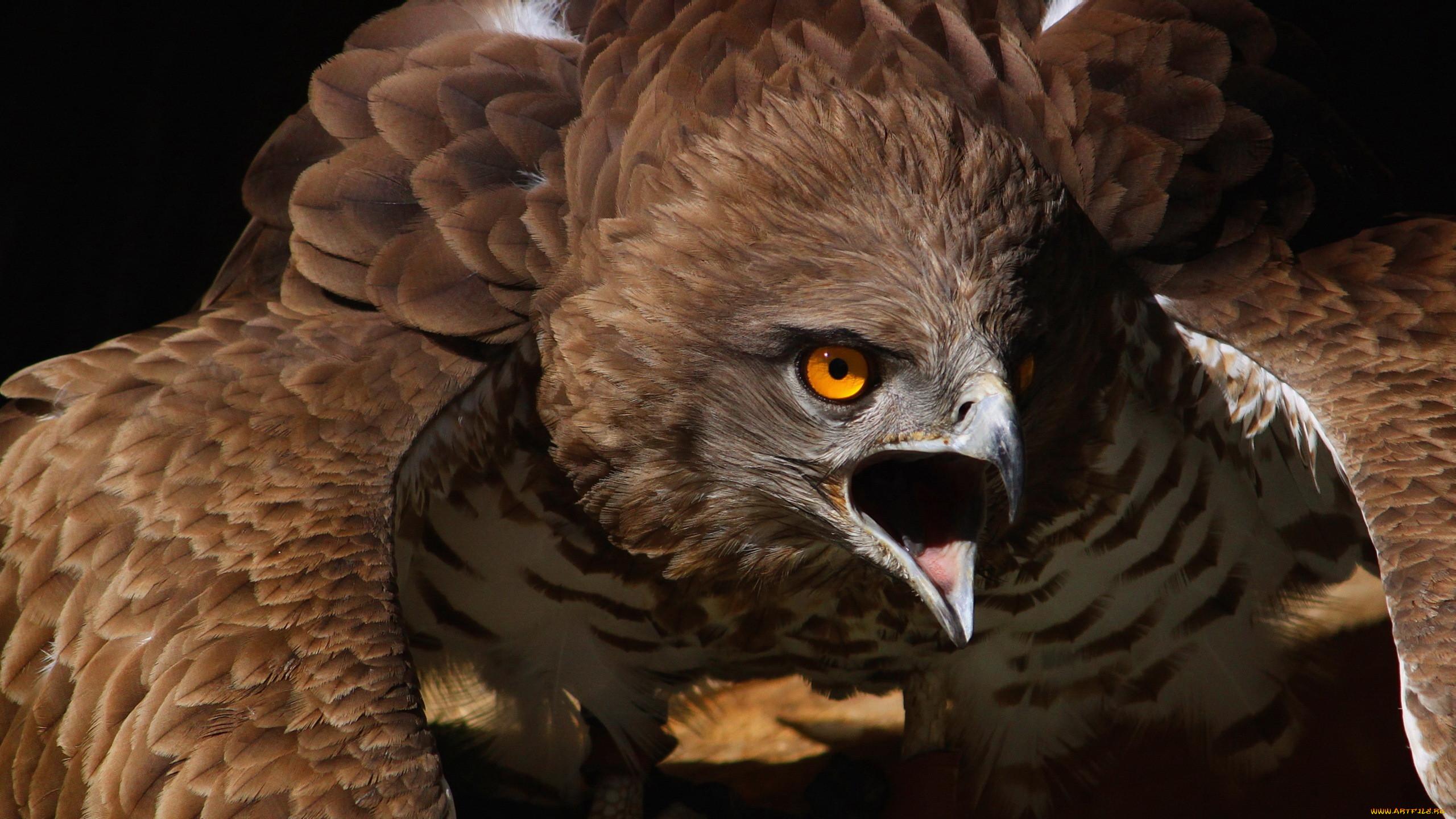 Хищные животные и птицы картинки